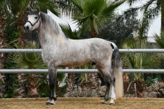 Al-Candelario_056