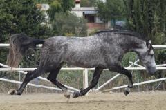 Alcotan_086