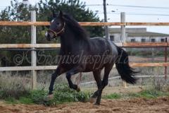 Bandolero-HE-113
