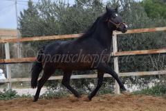 Bandolero-HE-168