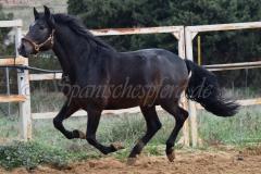 Bandolero-HE-96