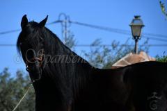 Bucanero_062