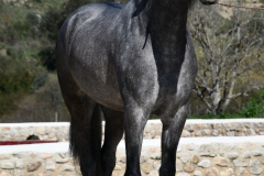Cachorro-de-Torrecilla_038