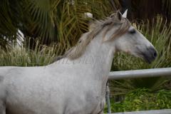 Camarona-Nadales_046