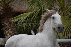 Camarona-Nadales_070
