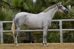 Camarona-Nadales_085