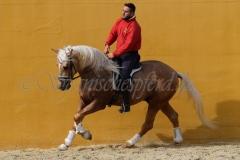 Campeon-Lusitano_183