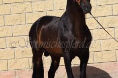 Caprichoso-113