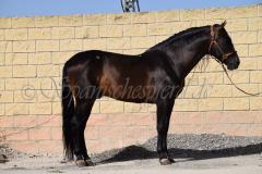 Caprichoso-75