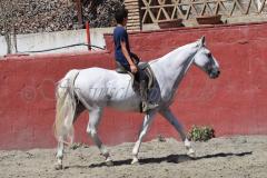 Cervantes_249