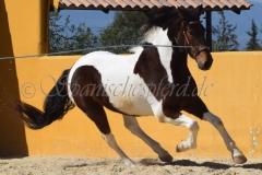 Costalero_092