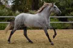 Gacho-Nadales_008