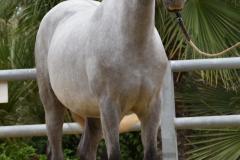Gacho-Nadales_082