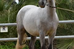 Gacho-Nadales_093