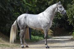 Gacho-Nadales_065