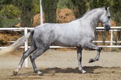 Gacho-Nadales_116