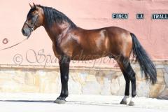 Hispano_045
