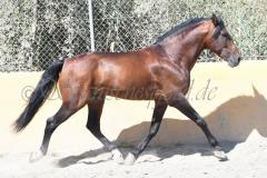 Hispano_144