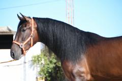 Nicasio-de-Arcos_036