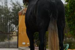 Seductora-Los-Hoyos_115