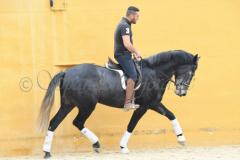 Seductora-Los-Hoyos_335